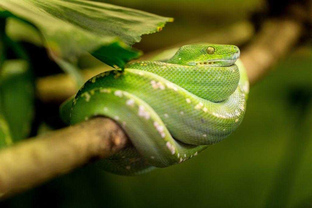 serpente verde nei sogni