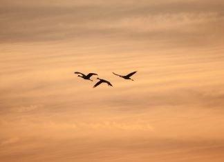 Sognare gli uccelli significato simboli e numeri da giocare