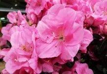 Inviare fiori a domicilio: ecco perché conviene