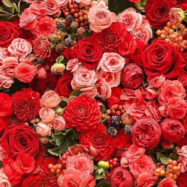 bouquet, fiori e piante a domicilio