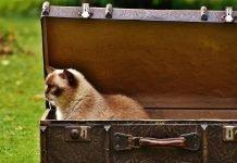 gatto trasloco organizzare