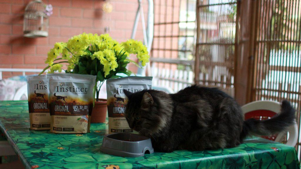 L'alimentazione del gatto consigli utili per crocchette