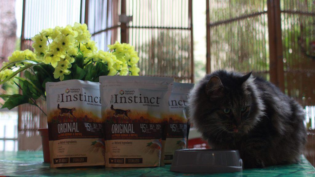 Alimentazione gatto consigli