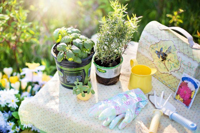 Le erbe aromatiche o aromi in casa o giardino