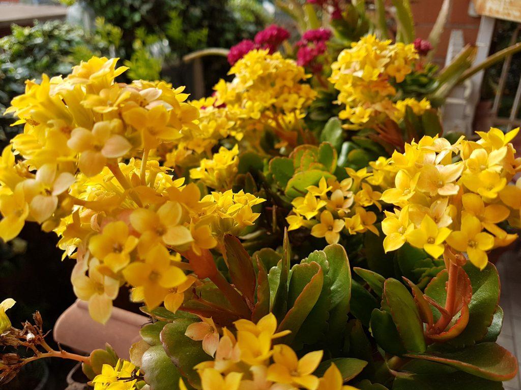Piante Da Regalare A Pasqua fiori estivi da giardino e casa come scegliere: 10 piante da