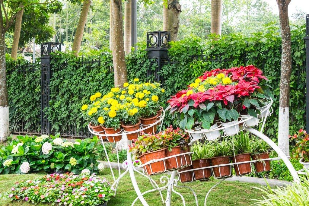 Fiori E Piante Da Giardino.Fiori Estivi Da Giardino E Casa Come Scegliere 10 Piante Da Fiore