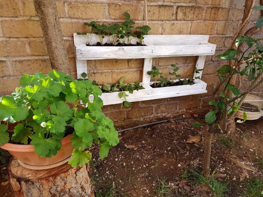 Giardini Verticali Fai Da Te come fare fioriere shabby chic con i pallet - notizie in vetrina