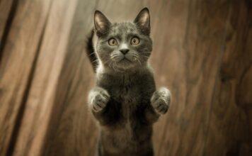 gatti e cibo ipoallergenico