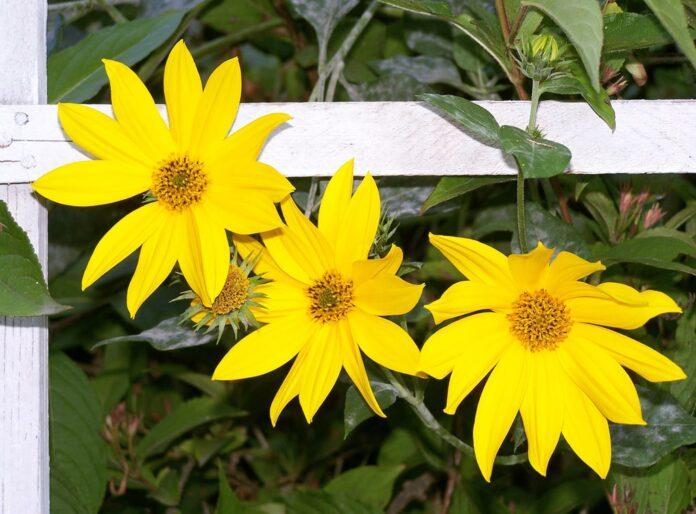 piante e sole