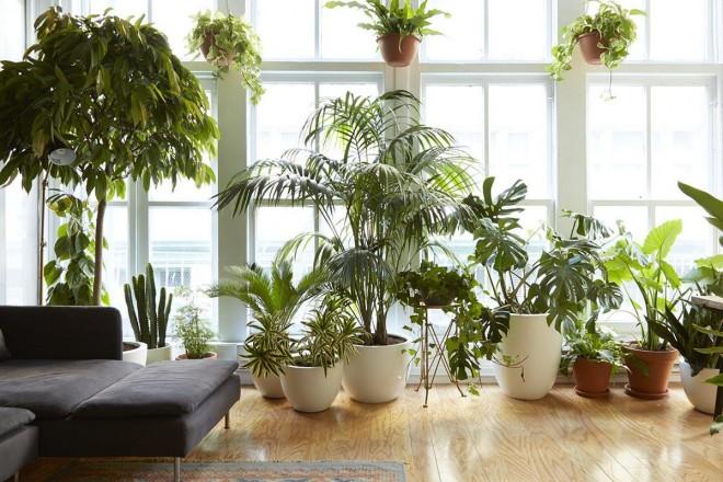 piante che vivono con poca luce