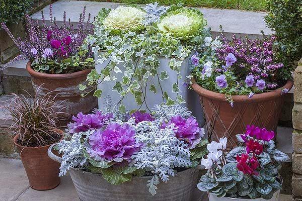13 Fiori invernali da giardino e balcone