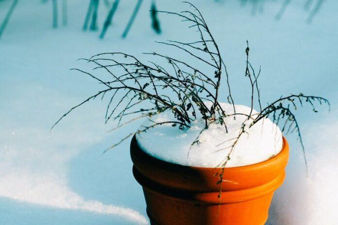 Riparare le piante dal gelo e dalla neve: consigli pratici