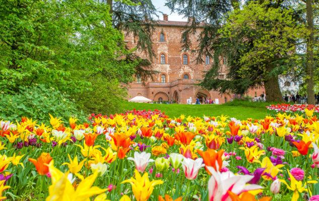 Leggende del tulipano 6 storie sui tulipani
