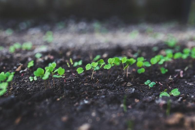 semi germinazione