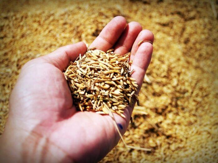 Semina: come seminare e raccolta dei semi
