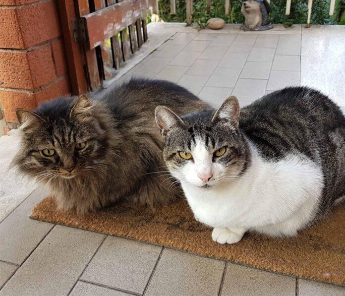 Gatto in arrivo in casa: preparagli un rifugio