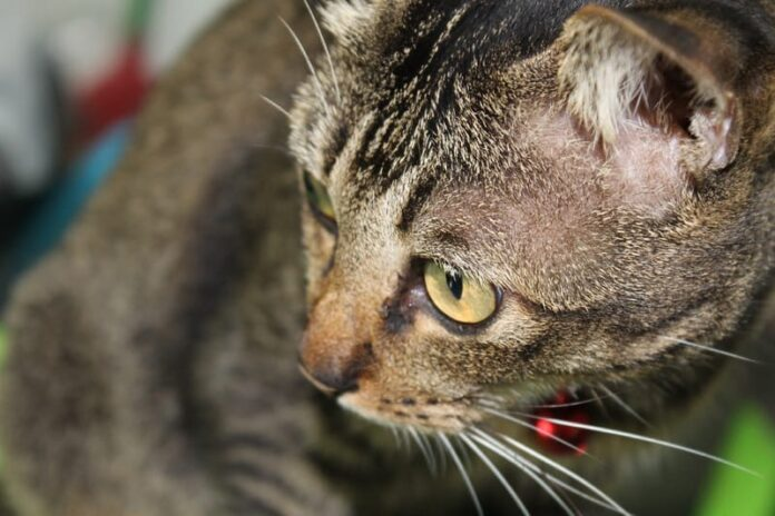 Gatti anziani e qualità della vita