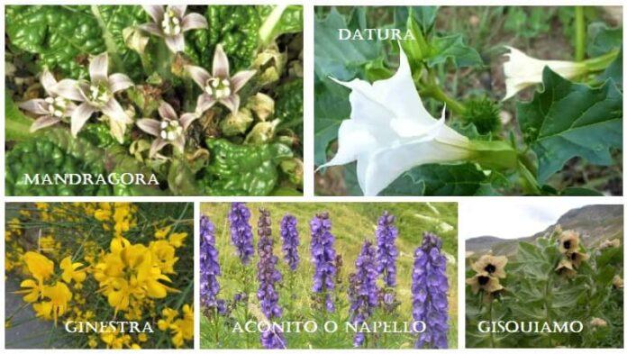 Piante allucinogene spontanee italiane 5 erbe delirògene psicoattive