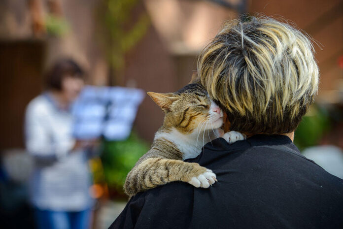 Dove adottare un gatto? L'oasi felina Porta Portese visitata anche da V. Raggi