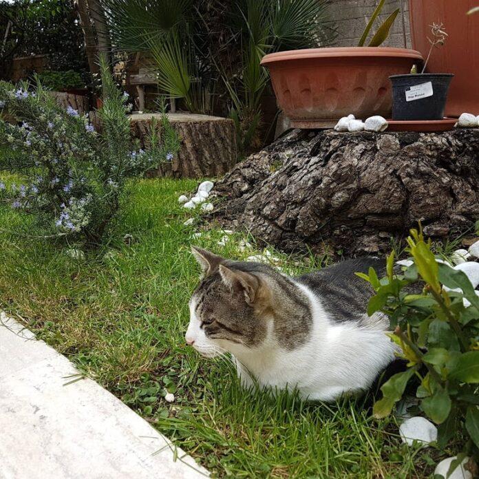 Gatti paurosi: ansia e paura nel gatto cosa fare