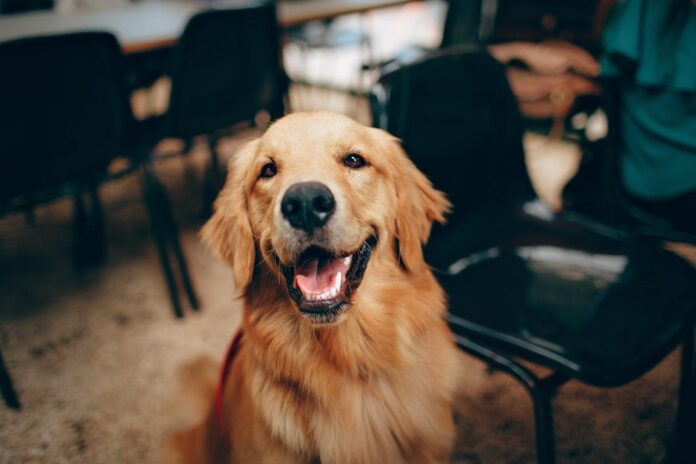 Perché i cani ci aiutano così tanto?