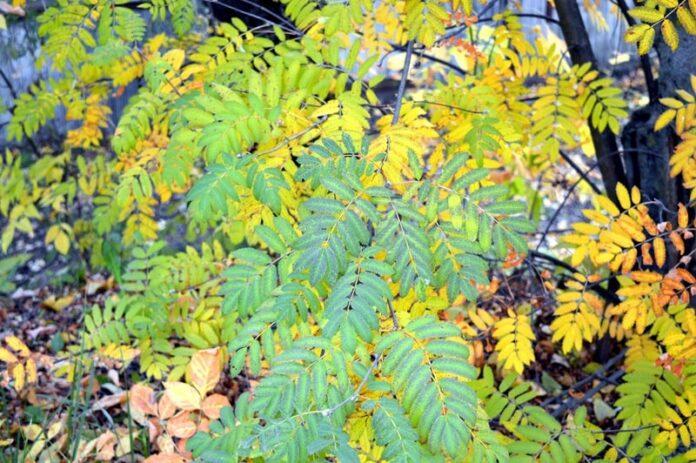 Foglie gialle nelle piante significato e interventi