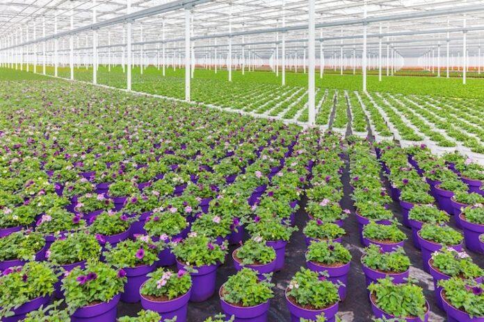 irrigazione per vivaismo ecco dove trovare l'occorrente