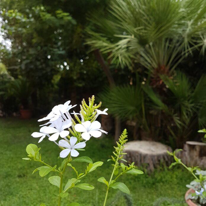 Settembre e Ottobre curare il giardino ed il verde